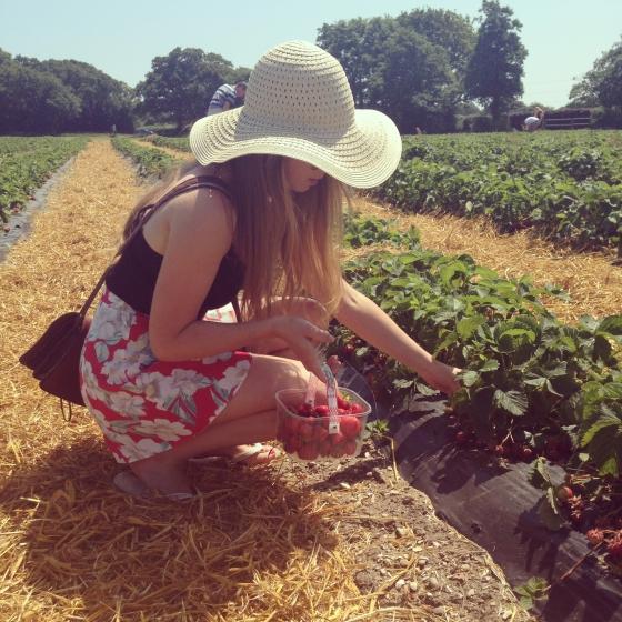 pick your own strawberry farm