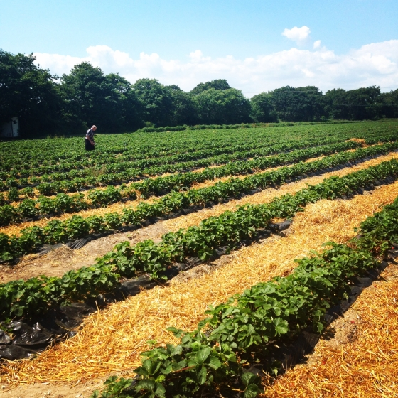 Pick your own dorset