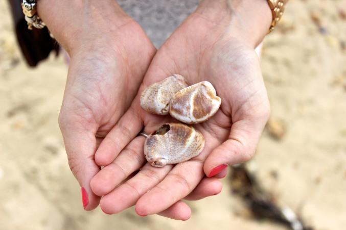 Shells palm